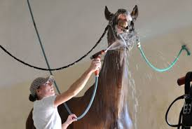 How Can I Get Hot Water In My Horse Barn? - The #1 Resource For ... Defeat The Enemy Fly Control Options For Horse And Barn Music Calms Horses Emotional State The 1 Resource Breyer Crazy In At Schneider Saddlery Horsedvm Controlling Populations Around Oftforgotten Bot Equine Dry Lot Shelter Size Recommendations Successful Boarding Your Expert Advice On Horse 407 Best Barns Images Pinterest Dream Barn Barns A Management Necessity Owners Beat Barnsour Blues Care Predator Wasps Farm Boost Flycontrol Strategies Howto English Riders