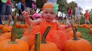 Heather Hill Pumpkin Patch by Pumpkin Patch At Walden Farm Features Lots Of Family Fun Lead230