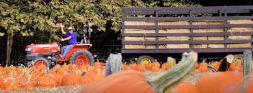 Pumpkin Picking Nj by Pumpkin Picking Pony Rides Maze Williams Nursery Of Westfield