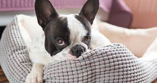Pumpkin Puree For Dog Constipation by Best Home Made Remedies For Your Constipated Pet Petcoach