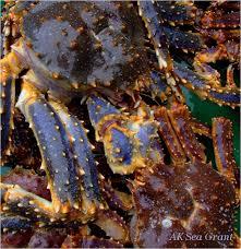 Decorator Crab Tank Mates by Snow Crab Love