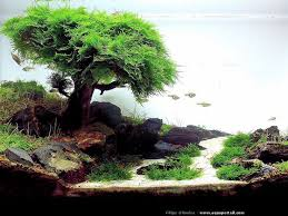 Best 25 Aquarium aquascape ideas on Pinterest