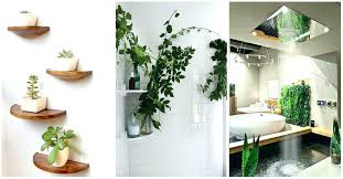 Plants In Bathroom Good For Feng Shui by Surprising Best Bathroom Plants View In Gallery Bathroom Plants