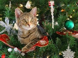 Type Of Christmas Tree That Smells by Help How Do I Keep My Cat Out Of The Christmas Tree