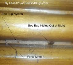 Small Dressers At Walmart by How To Spot Bed Bugs In Used Furniture