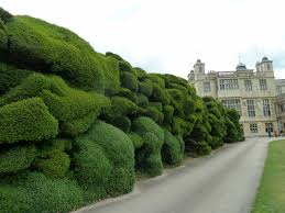 Decor Tips Simple Topiary Tree Design Ideas For Outdoor Ideas