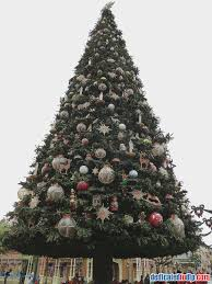 Christmas Tree Shop Warwick Rhode Island by Christmas Trees Freehold Nj Photo Albums Fabulous Homes Interior