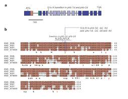 Role of PHABULOSA and PHAVOLUTA in determining radial patterning