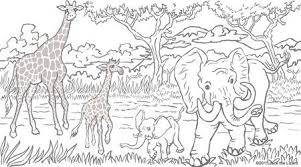 Animal Coloring Pages For Adults Ideal Free
