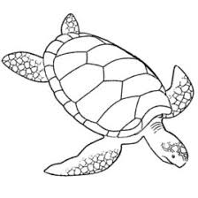 Turtles Coloring Pages For Adults Printable Kids Colouring