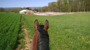Horseloverz Hashtag On Twitter Bullhide Belt Coupons Deals Direct Heaters Equine Couture Joy Saddle Pad Smart Scrubs Promo Code Best Coupons Western Schools Transfer Window Deals 2018 Up To 85 Off Gucci Verified Couponslivesunday Horse Equine Traformations Coupon Advertising Ideas Horseloverz Com Free Shipping August Shrockworks Discount March 2019 Apple Calendar Back In The Saddle Coupon Bob Evans Military Most Updated Lovesaccom Coupon Code 10 15 Horseloverz Competitors Revenue And Employees Owler