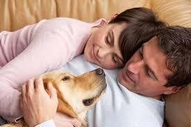 agape animal hospital agape veterinary clinic veterinarian in horseheads ny