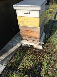 Linda's Bees Kenya Bkeeping Moving Top Bar Hives And Other Minor Disasters Youtube Like A Girl Langstroth Vs Top Bar Hive Talking With Bees Nice Now My Bees Have Mice Honey Bee Suite Original Backyardhive Passage Bars Building Our Ipdence Homestead The Best Hive Wild Bunch