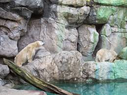Cincinnati Zoo Halloween by My Polar Bear Friends And Friends Of Polar Bears The Battle Of