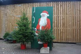10ft Christmas Tree Uk by Christmas Trees