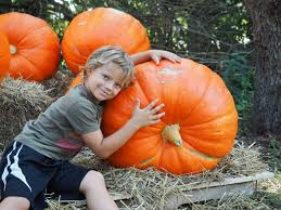 Dollingers Pumpkin Farm Minooka Il by Pumpkin Patches With Fall Activities Near Chicago 2017 Chicago