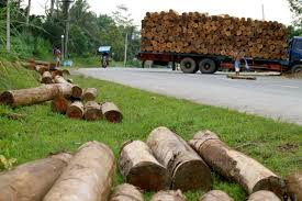 100 Used Logging Trucks Philippines Timber Hauling For A Living Pulitzer Center
