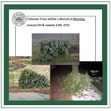 Christmas Tree Disposal Nyc 2015 by City Of Auburn Ny New Streamline 2015 Trash U0026 Recycling Info