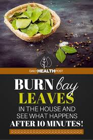 Burn Bay Leaves In The House And See What Happens After 10 Minutes ... Evergreen Winter Damage Learn About Treating And Preventing Cheat With Low Tunnels Fall Leaf Burn Youtube Fire Pit Safety Maintenance Guide For Your Backyard Installit Outdoor Burning Nonagricultural Bay Leaves In The House And See What Happens After 10 Minutes Tips For Removing Poison Ivy Bush Insect Pests How To Identify Treat Bugs That Eat To Guidelines Infographic Dont Holly Hollies With Scorch Glorious Autumn My Minnesota Backyard Prairie Roots April Month Powell River Today