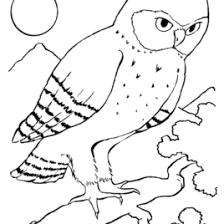 Printable Coloring Pages Of Birds AZ Bird