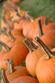 Pumpkin Patch Seattle Washington by Best 25 Spooner Farms Ideas On Pinterest Corn Maze Harvest