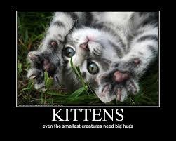 Hug A Kitten Motivational By Val30fDr3am5