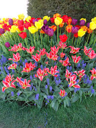 its time to plan your garden that bloomin garden