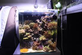 aquarium nano eau de mer nano bac eau de mer page 2