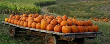 Boulder Creek Pumpkin Patch by Pumpkin Patch Halloween Autumn Wallpaper 2560x1024 480185