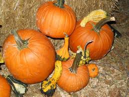 Pumpkin Patches In Arkansas by Don U0027t Miss These 10 Great Arkansas Pumpkin Patches This Fall