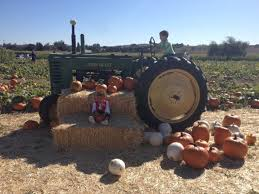Pumpkin Patch Dixon Il by 7 Charming Pumpkin Patches In Northern California That Are Picture