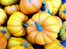 Wisconsin Pumpkin Patches 2015 by 5 Amazing Maryland Pumpkin Patches Near Washington Dc Walking On