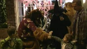 Is Halloween Always Capitalized by Halloween Fursuiting Fun On Main Street Bothell 2010 Youtube
