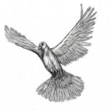 Pencil Drawings Doves Flying Dove Drawing Joy Neasley