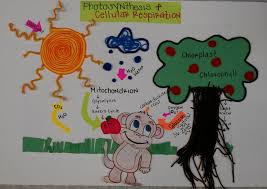Photosynthesis Amp Cellular Respiration 3D Poster Sample 1 2Photosynthesis And Project
