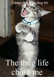thug cat i didnt choose the thug the thug chose me thug cat