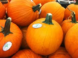 Pittsburgh Area Pumpkin Patches by Five Pumpkin Patches Worth Visiting Algonquin Il Patch