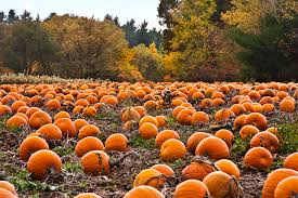 Oklahoma Pumpkin Patches by The 6 Stages Of Fall In Texas Her Campus
