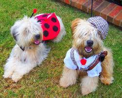 Non Shedding Dogs Small To Medium by Medium Dog Breeds Non Shedding Dog Pet Photos Gallery Ookbq7d2ed