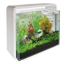 Mesmerizing Small Aquarium Design Ideas Gallery - Best Idea Home ... Amazing Aquarium Designs For Your Comfortable Home Interior Plan 20 Design Ideas For House Goadesigncom Beautiful And Awesome Aquariums Cuisine Small See Here Styfisher Best Stands Something Other Than Wood Archive How To In Photo Good Depot Kitchen Cabinet Sale 12 To Home Aquarium Custom Bespoke Designer Fish Tanks Perfect Modern Living Room Lighting 69 On Great Remodeling Office 83 Design Simple Trending Colors X12 Tiles Bathroom 90
