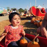 Mcgrath Pumpkin Patch Camarillo by Mcgrath Brothers Great Pacific Pumpkins 16 Photos Christmas