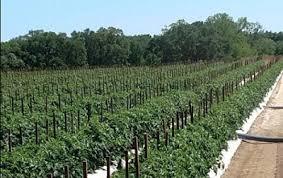 Pumpkin Patch Near Pensacola Fl by Florida Panhandle Florida Panhandle U Pick Farms Find A Pick Your