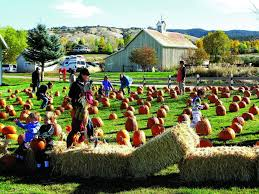 Colorado Springs Pumpkin Patch by Pick Your Pumpkin At Eagle Ranch Patch Vaildaily Com
