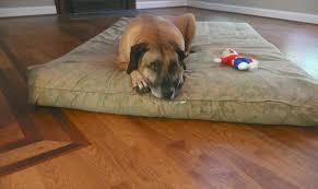 Dog Urine Odor Hardwood Floors by Raleigh Hardwood Floors Wake Forest Hardwood Floor Refinishing