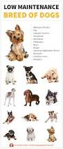 Do Miniature Pinschers Shed by Everything You Need To Know About Low Maintenance Dogs My Puppy