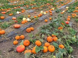 Irvine Pumpkin Patch Hours by Chasin U0027 Mason Fall Bucket List The Pumpkin Patch