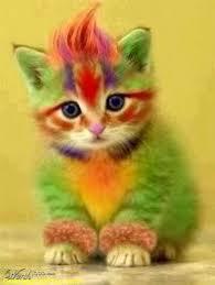 kitty cat parrot kitty cat kitty cat kittens grumpy cat no meme
