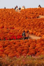 Powell River Pumpkin Patch by 380 Best Landscapes Scenic Views U0026 Nature Images On Pinterest