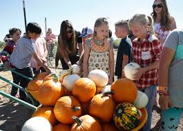 Johnson Farms Pumpkin Patch by Check Out The Pumpkins At Gilcrease Orchard U2014 Photos U2013 Las Vegas