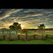 Lodi Pumpkin Patch by Keema U0027s Pumpkin Farm Home Facebook